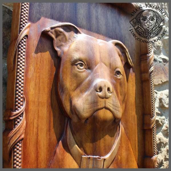 Dog portrait pitbull
